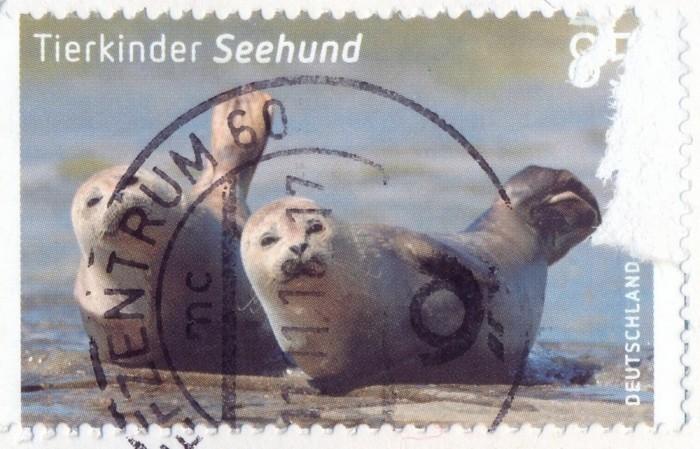 Детеныши тюленей