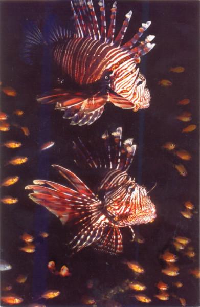 Рыбка Океанариум