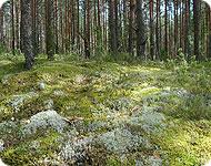 Псковский лес
