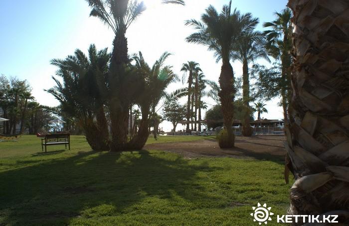 Пальмы отеля на фоне мертвой земли