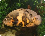 Алматинский аквариум