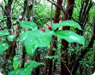 Кубинские джунгли