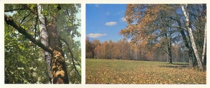 картинки береза и дуб