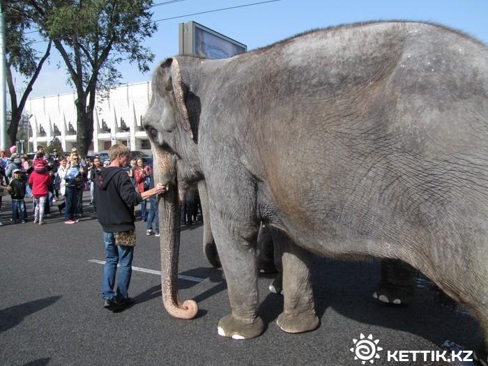 Слоны на улицах