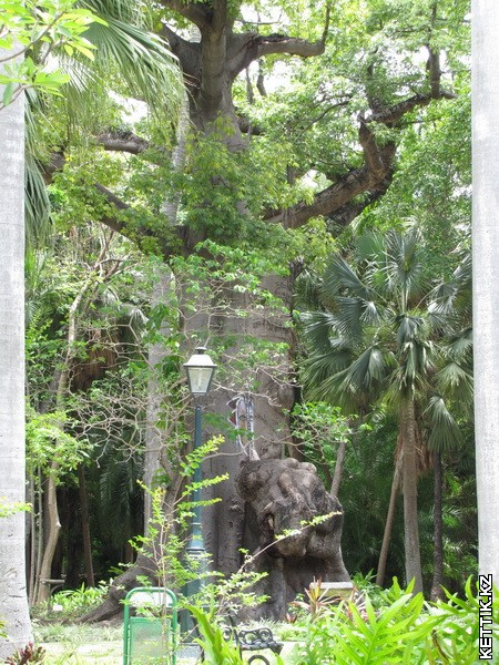 Парк в Гаване