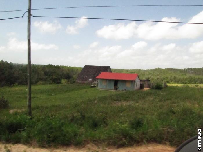 Табачные поля