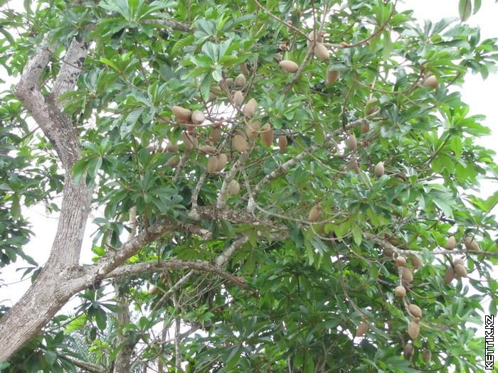 Плоды на деревьях