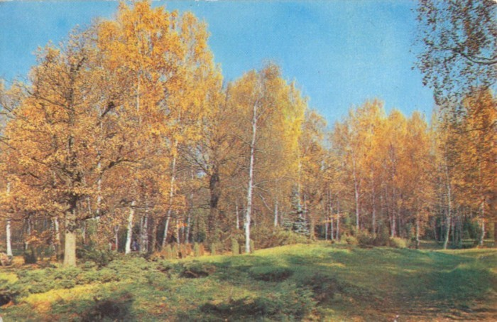 В осеннем лесу