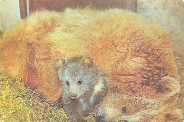 Алма-Атинский зоопарк