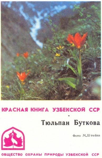Тюльпан Буткова