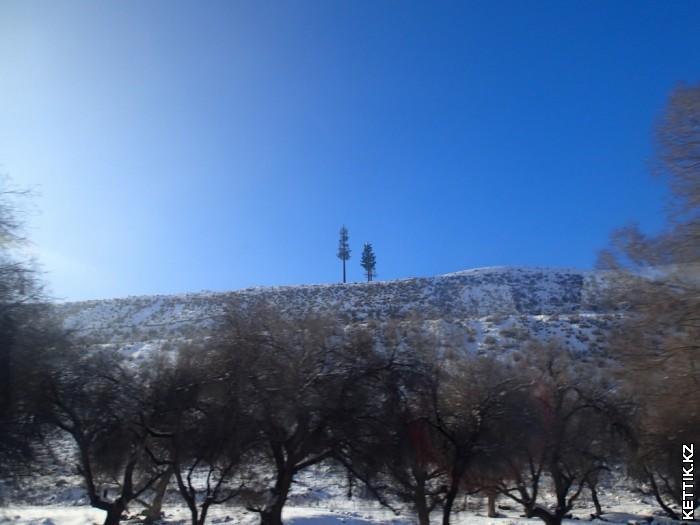 антенны елки