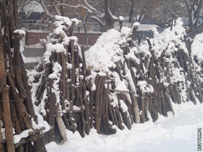 Связки деревьев