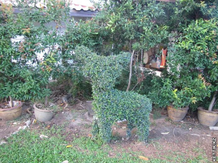 Зеленый олененок