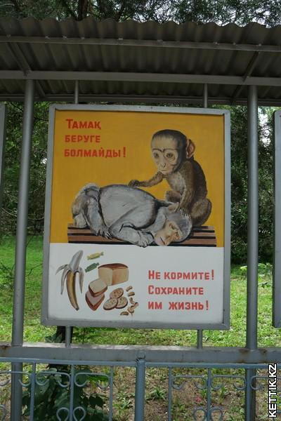 Страшные обезьяны