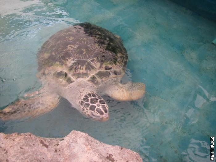 Морская черепаха/