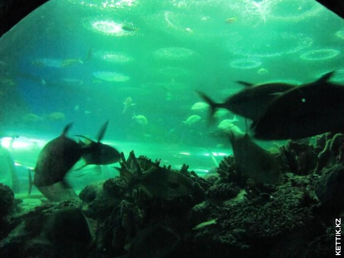 Тоннель-аквариум