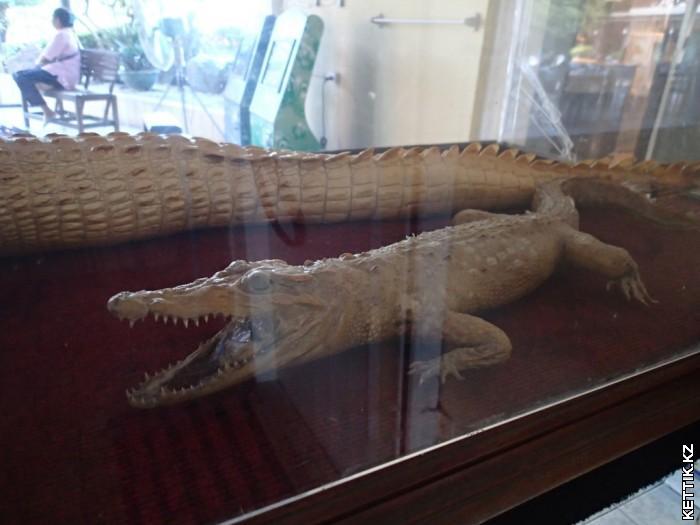 Крокодиленок