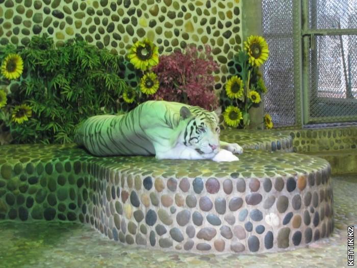 Тигры модели