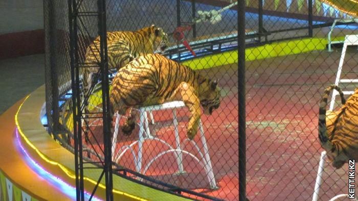 Тигры на тумбах