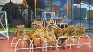 Тигровое шоу