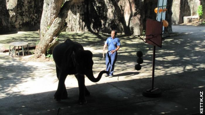 Слоновье шоу
