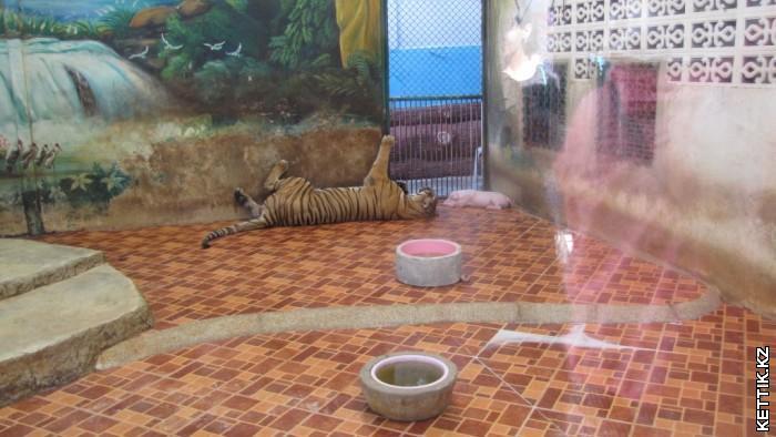 Тигросвиньи