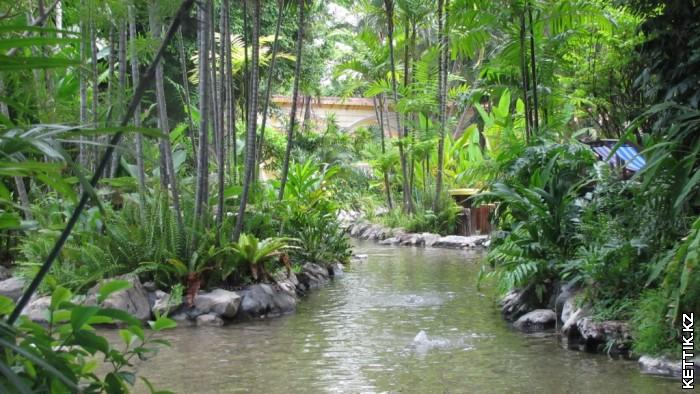 Тропический пруд