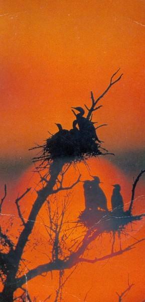 Гнезда бакланов