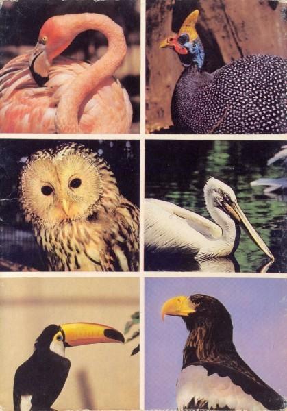 Птицы Московского зоопарка