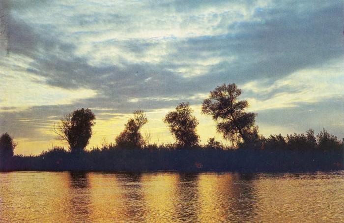 Ивовые леса