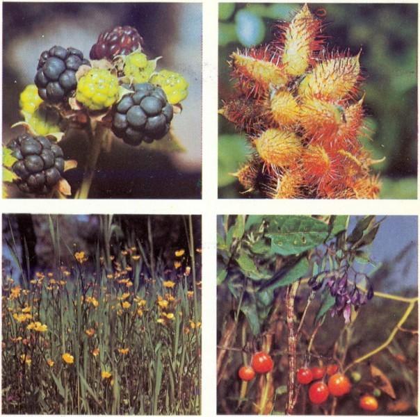 Луговые растения