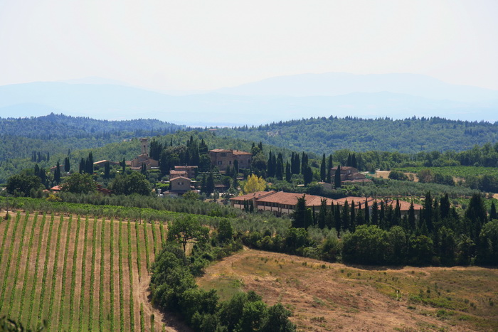 Виноградники 1