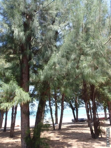 Джомьтьен пляж