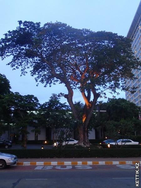 Освещенное дерево