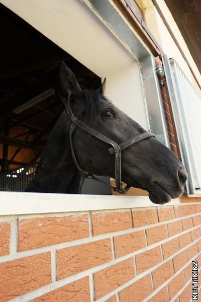 Almaty Horse Polo Club