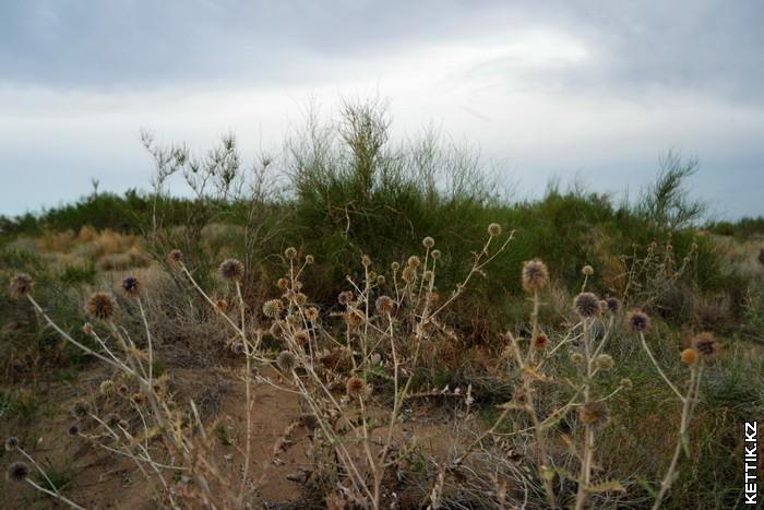 Растительность Балхаша