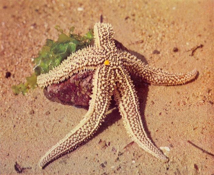 Звезда на берегу
