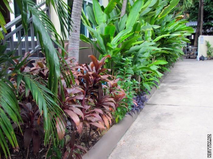 Растения в отеле