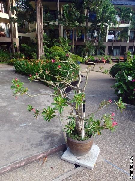 Цветущее дерево в горшке