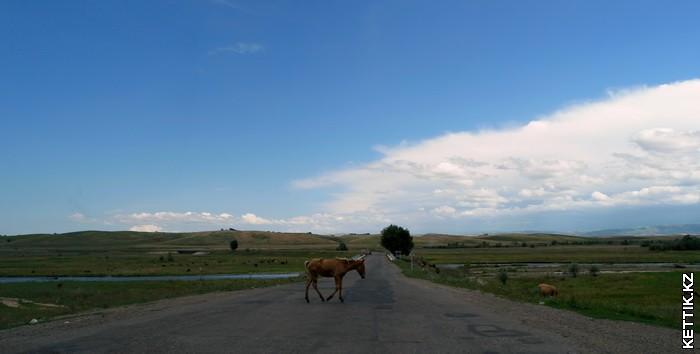 Жеребенок на дороге