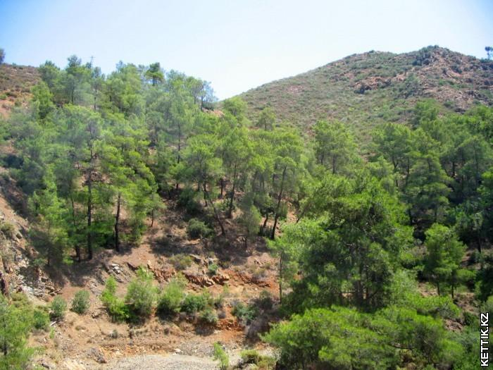 Сосны на холмах