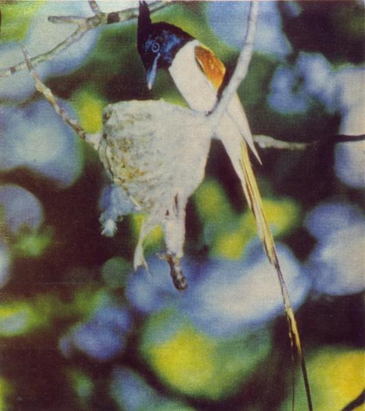 Птицы Казахстана