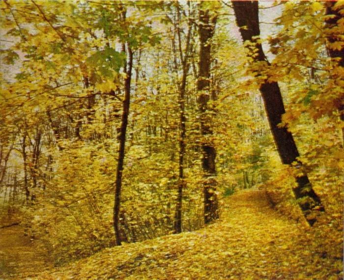 Грабовая дубрава осенью
