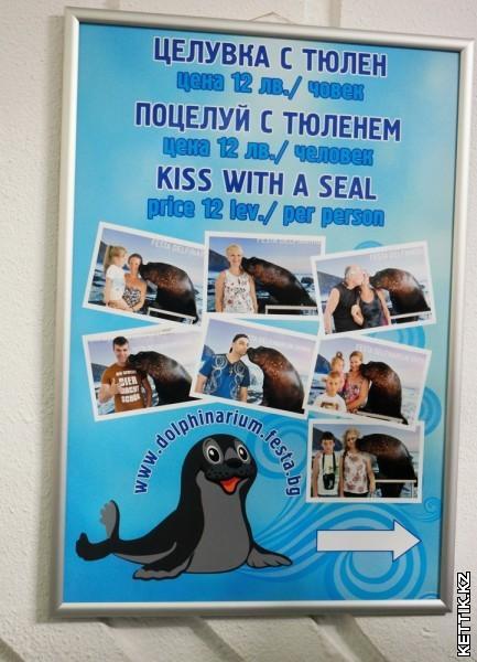 Поцелуй с тюленем