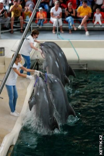 Дельфины с обручами