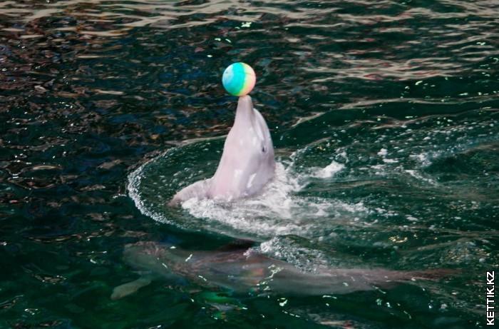 Дельфин с мячом