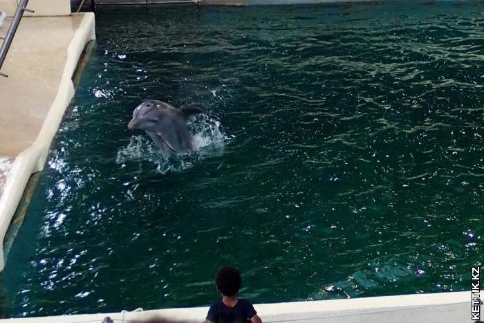 Прыгающий дельфин