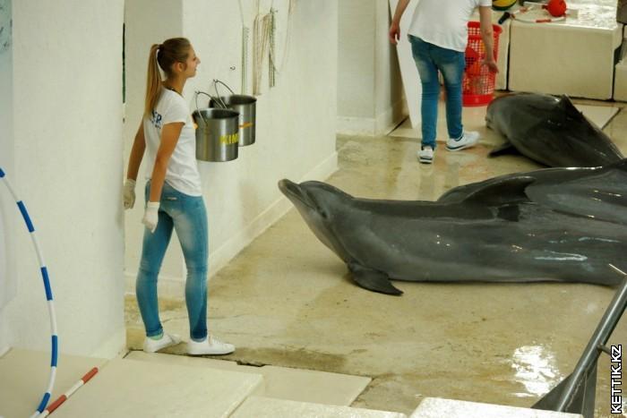 Дельфины на берегу
