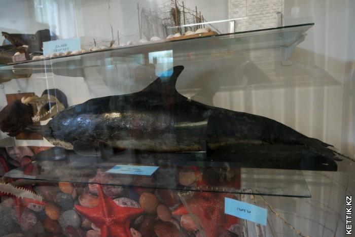 Чучело дельфина