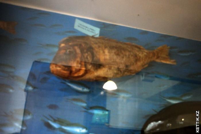 Чучело рыбы